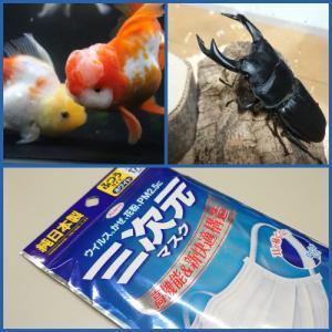 コロナの影響〜観賞魚フェアも中止〜