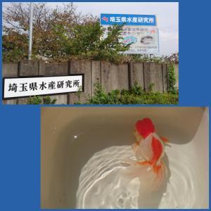 コロナの影響〜養殖魚まつりまで中止〜