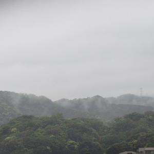バジルは雨後の竹の子!
