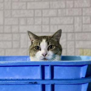 寒猫アカムツ開幕戦