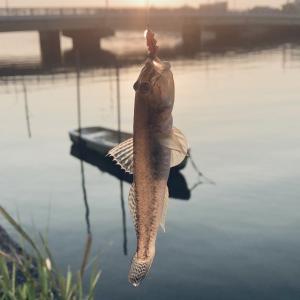 真夏の小物釣り