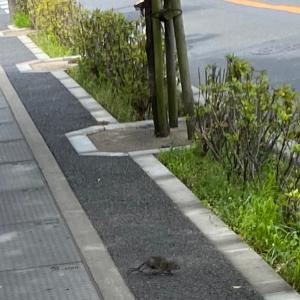 チビマウス発見