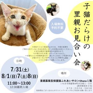子猫だらけの里親お見合い会 7/31・8/1・7・8
