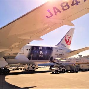 日本航空422便(モスクワ→成田)エコノミー搭乗記 2018年機内食