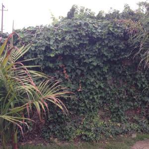 fence - redwood