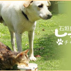 石垣島しっぽの会チャリティショップ☆