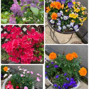 我が家のお花達