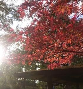 秋を愛するひとは。