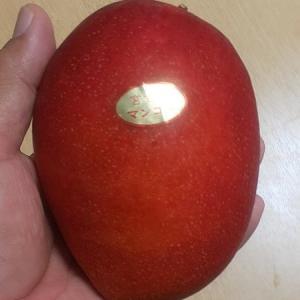 宮崎産マンゴー。