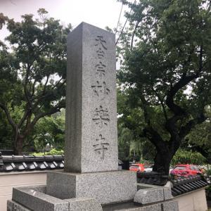 妙楽寺のアジサイ