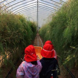 近所のこども園の子たちがアスパラガスの収穫体験