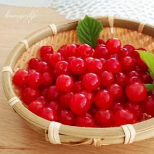 【庭仕事】ユスラウメ(山桜桃梅)の実を収穫+草むしり♪