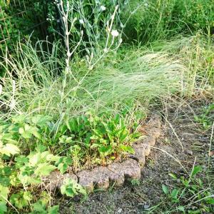 【庭仕事】草むしりビフォーアフター♪