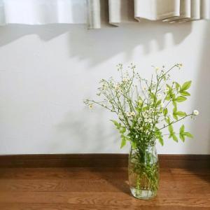 【お花+α】白いお花の雑草☆ハルジオン&とろとろお味噌汁~♪
