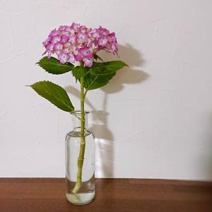 【100均+お花】セリア(seria)★シンプルなガラスベーススリムボトルにお花を飾ると可愛い♪