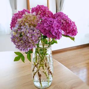 【お花】庭のあじさい(紫陽花)を部屋に飾って楽しんでます♪
