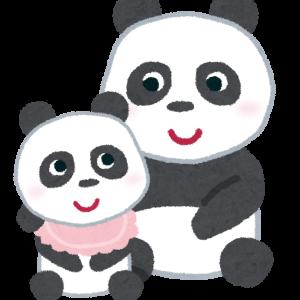 パンダの赤ちゃん誕生 和歌山・白浜アドベンチャーワールド