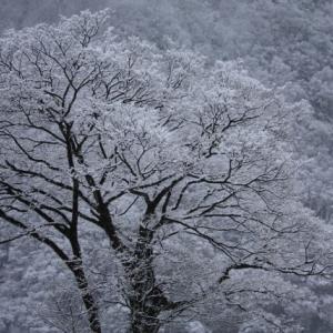 冬の季語で文章に「粋」を加えましょう。