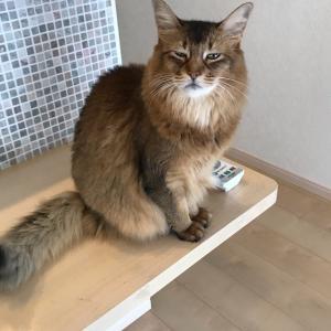 猫ざんまい