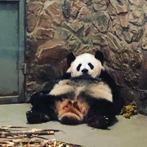 パンダに会いに