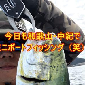 自由人特権を活かして和歌山県中紀でミニボートフィッシング!今日もシイラ釣ったぞー