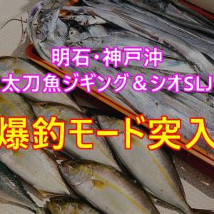 明石・神戸沖での太刀魚ジギング&シオSLJは爆釣モード突入!仕上は刺身と串焼きBBQ❣