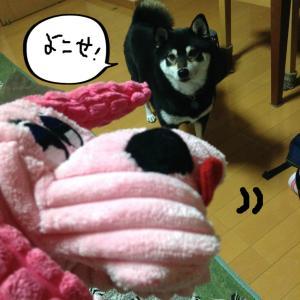momo☆HBD5才☆