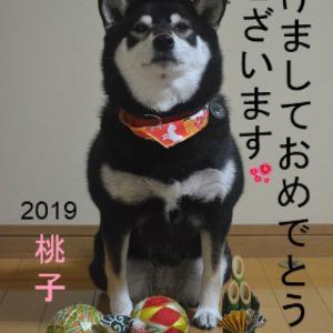 2019年お正月のmomo☆