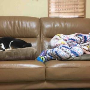 momoとソファーと次女☆