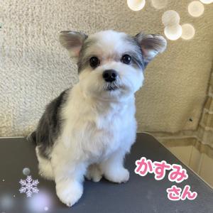 かすみちゃん~チワマル