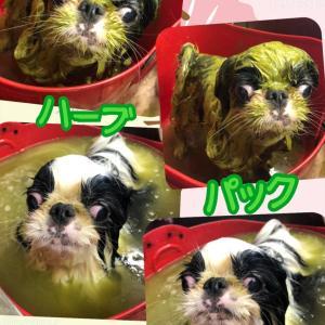 カイくん〜狆犬