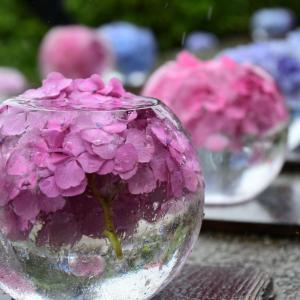 ご予約合間に、般若寺の紫陽花・初夏コスモスへ♪