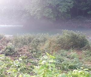 鮎  Rd20  阿賀野川水系 → 滝谷川