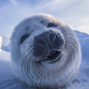 北極圏の価値!?