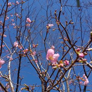 春の花が咲き始めましたね。