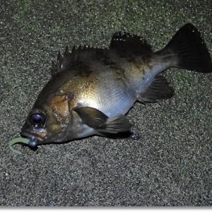 深夜のメバル釣り