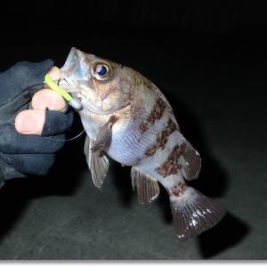 2019 初釣り