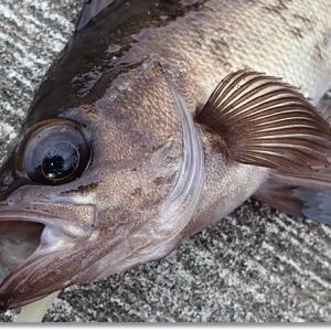 お魚さんは何処へ?