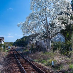 木蓮と列車