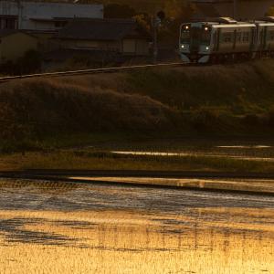 夕陽を浴びて走る列車