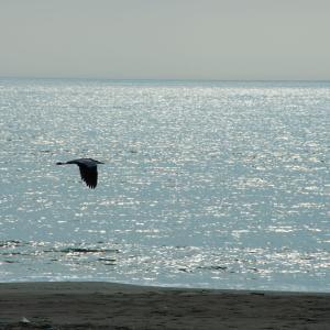 朝の海 Part8