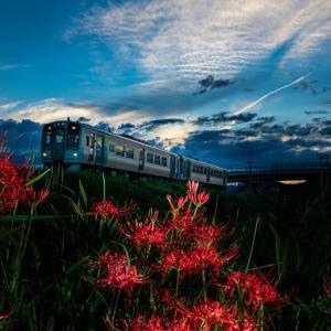 曼珠沙華と列車