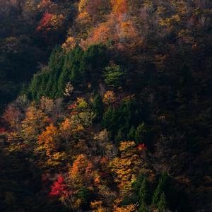 剣山スーパー林道の紅葉