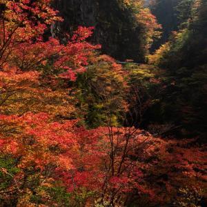 釜ヶ谷川の紅葉