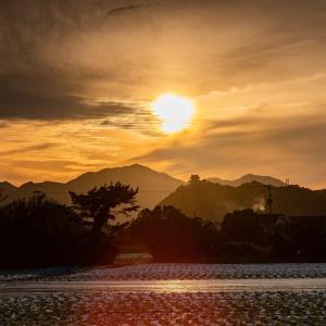サツマイモ畑からの夕陽