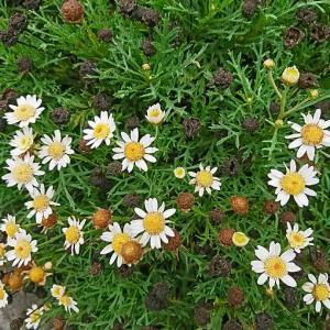 これも花の一部