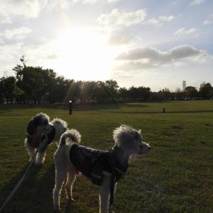 今日のお散歩 R011014 野々市市