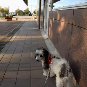 今日のお散歩 R030916 野々市市