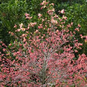 野の花 写真ブログ