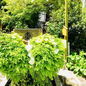 追加❣11月23日㈯ 練馬東神社金運アップ&お水取り 来年に向けて運気を上げていきましょう❤